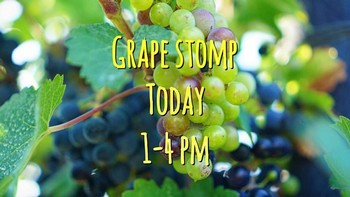 Grape Stomp Ticket